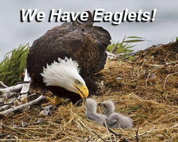 We Have Eaglets
